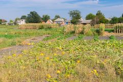 Landscape with vegetable gardens in rural Ukrainian village Royalty Free Stock Images