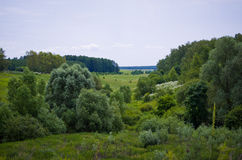 Landscape vegetation. Royalty Free Stock Photography