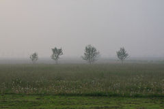 Landscape of the Veneto plain at dawn Royalty Free Stock Photography