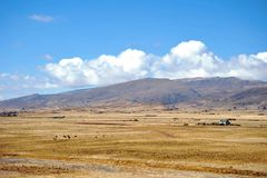 Landscape in the vicinity of Tiahuanaco. Stock Images
