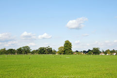Landscape View. English Countryside View of an Open Field and Blue Sky in Summer Stock Image