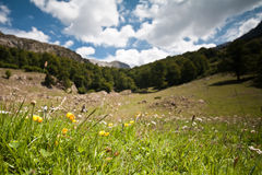 Landscape view. A landscape view in Zuriza's Valley, Spanish Pirineos Royalty Free Stock Photography