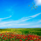 Landscape view. Green hills and blue sky at spring Royalty Free Stock Photography