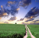 Landscape view. Green hills and path at sunset Stock Photos