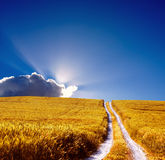 Landscape view. Wheat field  and path and cloud Royalty Free Stock Photography