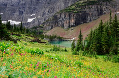 Landscape view of alpine meadow in Glacier NP mountains Royalty Free Stock Photo
