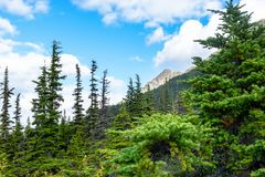Landscape view of alpine trees and the peak of a mountain in the background stock images