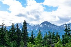 Landscape view of alpine trees and snow covered mountains royalty free stock image