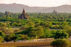 Landscape view of ancient temples with cows and fields, Bagan Stock Image