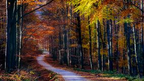 Landscape view of autumn forest colorful foliage and road Royalty Free Stock Photo