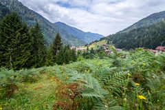 Landscape view of Ayder Plateau in Rize,Turkey. Ayder Valley is popular destination for summer tourism Stock Images