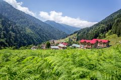 Landscape view of Ayder Plateau in Rize,Turkey. Ayder Valley is popular destination for summer tourism Stock Photo