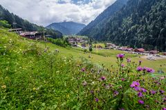 Landscape view of Ayder Plateau in Rize,Turkey. Ayder Valley is popular destination for summer tourism Stock Image