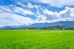 Landscape View Of Beautiful Paddy Field Rice Plantation royalty free stock photo
