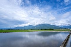 Landscape View Of Beautiful Paddy Field Rice Plantation stock images