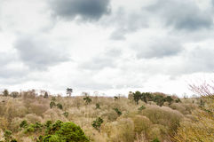 Landscape View Royalty Free Stock Image