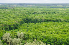 Landscape view on a big forest Stock Image