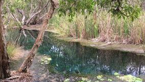 Bitter Springs Northern Territory Australia 03