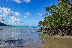 Landscape view of Cape Tribulation in Daintree National Park in the far tropical north of Queensland, Australia. Landscape view of Cape Tribulation in Daintree stock photography