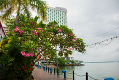 Landscape view of the Central promenade. A beautiful shrub with pink flowers. Sandakan city, Borneo, Sabah, Malaysia. Landscape view of the Central promenade. A stock image