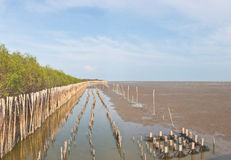 Landscape view of coastal mangrove forest conservaltion site Stock Images