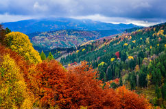 Landscape view of colorful autumn foliage forrest at cloudy day Stock Photography