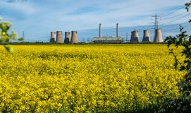 Landscape view of cooling towers of a coal fuelled power station in the foreground is a bright yellow field of blooming royalty free stock image
