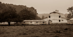 Landscape view of a cow farm ranch in fog Stock Photo