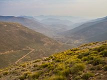 Landscape view of dangerous and curvy mountain dirt road with steep drop to the valley and sheep, Lesotho, Africa. Dangerous and curvy mountain dirt road with Royalty Free Stock Photos