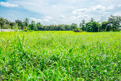 Landscape view of deserted land with green grass and tree with b Royalty Free Stock Image
