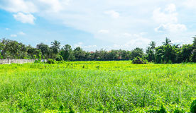 Landscape view of deserted land with green grass and tree with b Royalty Free Stock Photos