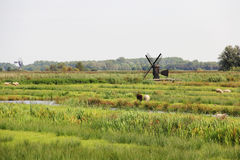 Landscape view of farm field with sheeps and windmill, Zaanse Schans, Netherlands. Stock Photo