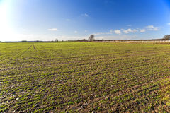 Landscape view of farmland. Landscape view over arable farmland with growing seedlings Stock Image