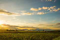 Landscape view of the the field in Thailand Stock Photo