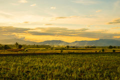 Landscape view of the the field in Thailand Royalty Free Stock Images