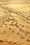Landscape view on footprints at sandy beach Stock Image