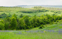 Landscape view on a forest Stock Photography