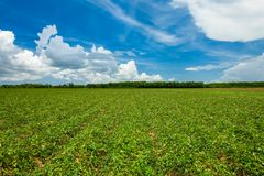 Agriculture field royalty free stock image
