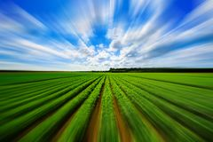 Agriculture vegetable field with motion blur. Landscape view of a freshly growing agriculture vegetable field with motion blur stock images