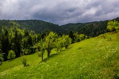 Landscape view of green meadow with some green trees and forest. In the background..Gorski kotar, Summer in Croatian mountains stock photography