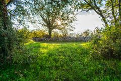 View of a meadow and a stone wall in autumn in Istria region in Croatia, Europe. Landscape view of a green meadow and a stone wall on an early morning during royalty free stock photography