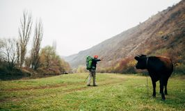 Landscape view image of tourist young man hiking in mountains. Traveler man trekking during his journey, looking to the cow. Landscape view image of tourist stock photos