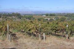 Landscape view of Inman Valley South Australia state, Australia. Landscape view of Inman Valley at McLaren Vale near Adelaide in South Australia state, Australia royalty free stock photo