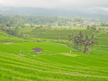 Landscape view of Jatiluwih Stock Photography