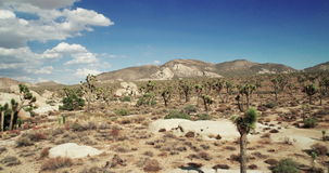 Landscape view of Joshua Tree National Park with Yucca and Joshua Tree. Desert view, cholla cactus garden. stock video footage