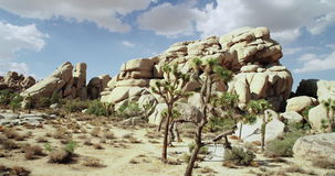 Landscape view of Joshua Tree National Park with Yucca and Joshua Tree. Desert view, cholla cactus garden. stock footage