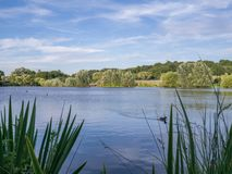 Landscape view of a lake with forest in the background stock photo