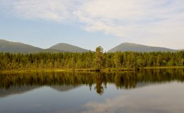 Forest lake in summer. royalty free stock photos