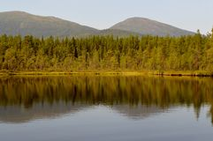 Forest lake in summer. stock photo