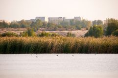 Landscape view of a lake in Vacaresti Nature Park, Bucharest City, Romania. Landscape view of a lake with reeds and buildings in Vacaresti Nature Park, Bucharest Royalty Free Stock Image
